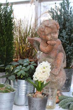 Mrs. Pedersen's garden: December 2014