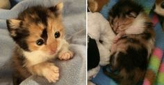 Have you ever rescued such a tiny kitten?