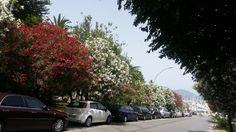 Straße in Alghero