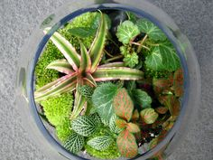 Maria Colletti has been designing self-contained biomes of moss, desert plants, tropical flowers and other unique environments for several years, artfully hand-building each terrarium—both opened and closed—that we sell at our Shop in the Garden.    Whether you're looking for a complete terrarium to take home during your visit, or the input and supplies necessary to create your own from scratch, I can't recommend Maria enough. She's an archive of knowledge when it comes to this sort of thing.