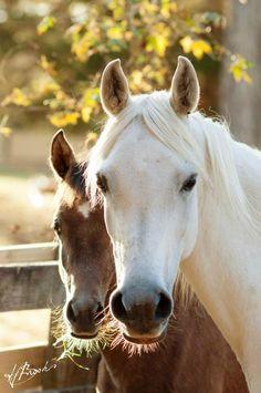 Arabian mare, Malawi PG (Botswana x Kuy Maya) and foal
