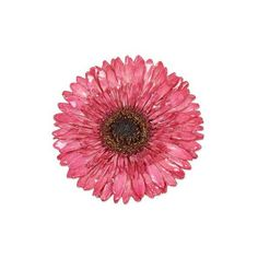 NOVICA Thai Handmade Natural Flower Brooch Pin ($27) ❤ liked on Polyvore featuring jewelry, brooches, flowers, natural flower, hot pink jewelry, daisy brooch, flower pin brooch, novica jewelry and daisy flower jewelry