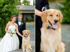 A dapper golden retriever happy to be apart of this classic real wedding. {Katelyn James Photography}