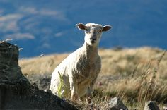 Chinese broadcaster buys Welsh farming series format