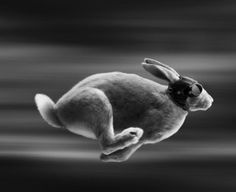 This is kind of twisted, but it makes me think of those greyhound dog races. Maybe this is the rabbits way of getting revenge!