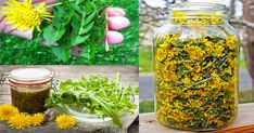 Here's How To Prepare Dandelion Tea And Syrup And Treat Cancer, Hepatitis, Liver, Kidneys, Stomach And Many More! Healthy Cholesterol Levels, Reduce Cholesterol, Cholesterol Diet, Fat Cutter Drink, Green Tea Diet, Liver Detox, Cancer Cure, Cancer Cells, Natural Remedies