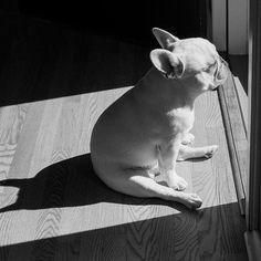 Un bain de soleil