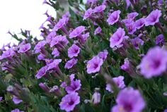 Consider these native plants to give a little local flavor to your garden.