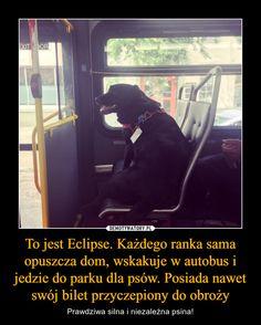 To jest Eclipse. Każdego ranka sama opuszcza dom, wskakuje w autobus i jedzie do parku dla psów. Posiada nawet swój bilet przyczepiony do obroży – Prawdziwa silna i niezależna psina! Wtf Funny, Funny Memes, Animals And Pets, Cute Animals, Everything And Nothing, Funny Socks, Rest Of The World, Happy Campers, Best Memes