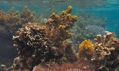 Foes can become friends on the coral reef