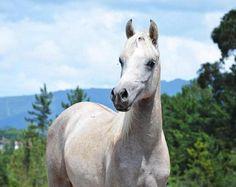 HE441981E - Yeguas potros y potras pra Animals, Horses For Sale, Countries, Animales, Animaux, Animal, Animais
