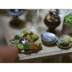 1/12scale miniature succulent  今日は先日の多肉ちゃんたちを寄せ植えしたりしていました❤ #dollhouse #miniature #handmade #crayart #succulent #ミニチュア #多肉植物 #樹脂粘土 #粘土細工 #インテリア雑貨