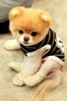 Cachorrito Boo.
