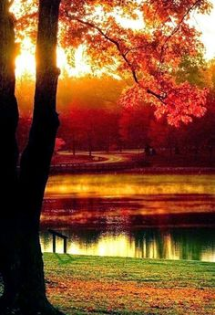 Autumn Beauty my favorite time of the year Beautiful World, Beautiful Places, Beautiful Pictures, Beautiful Scenery, Fall Pictures, Fall Images, Belle Photo, Beautiful Landscapes, Nature Photography
