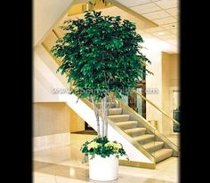 Artificial Ficus Benjamina trees are manufactured with Commercial Silk Int'l http://www.commercialsilk.com/large-artificial-trees_ficus-benjamina-tree_p_52.aspx