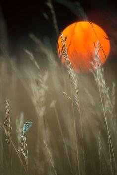 Butterfly Sunset, Czech Republic photo via dan