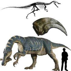 """Baryonyx  Baryonyx características  Baryonyx significa """"garra pesada"""" este nombre hace mención a la enorme garra curvada de unos 30 cms. de longitud. Este dinosaurio se diferenciaba de otros terópodos, por tener las patas delanteras robustas y corpulentas. El Baryonyx poseía algo que lo diferenciaba de otros carnívoros del Cretácico: su largo y estrecho cráneo, parecido al de los cocodrilos, además poseía el doble de dientes de la cantidad que solían tener los terópodos."""