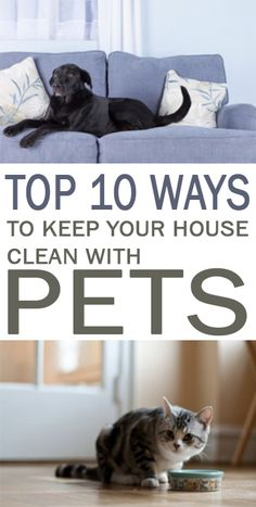 clean home, living with pets, keeping house clean with pets, cleaning hacks
