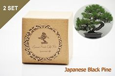 Gardening  Set of 2 Japanese Black Pine Bonsai Seed Kit Gift  Complete Kit -- This is an Amazon Associate's Pin. Find out more on Amazon website by clicking the VISIT button.