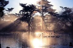 Парк «Золотые ворота» в Сан-Франциско  #travel #travelgidclub #путешествия #traveling #traveler #beautiful #instatravel #tourism #tourist #туризм #природа #парк #СанФранциско #золотые #ворота