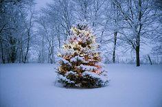 Christmas Lights Snow | christmas, snow, winter, xmas, xmas lights - inspiring picture on ...