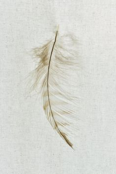 Owl Feather Art Photograph Natural History Series by dsbrennan