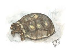 https://www.etsy.com/listing/221933198/reptile-art-redfoot-turtle-watercolor?ref=related-0