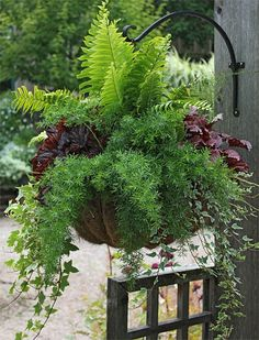 I could do this with some of my Heuchera (the purple red in photo, or another color), some Ivy, my Ostrich fern, & more trailing annuals. Hosta could be added too