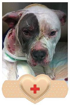 Dog Severely Burned Trying to Shield Her Pups From Fire. What an amazing mama!