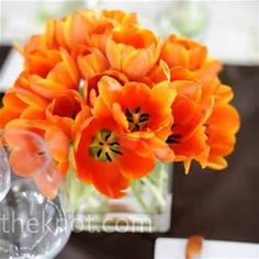 tulips and dahlia flower - - Yahoo Image Search Results