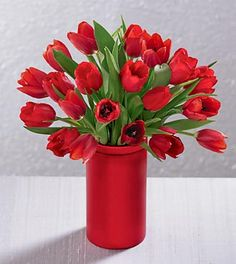 red tulips in a red vase