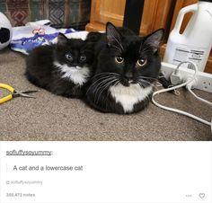 30 photos commentées de chats absolument hilarantes - page 5