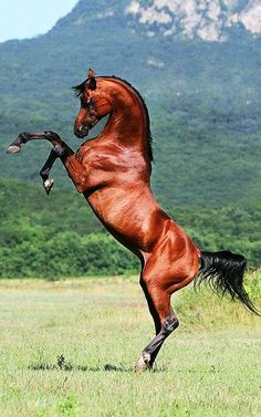 TODOS los caballos necesitan libertad!!!!                              …