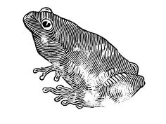 #linocut #frog #blackandwhite #contemporaryart #contemporary #artwork #graphic #linoprint #print #art #animals Linoprint, Contemporary Artwork, Gardening, Abstract, Drawings, Animals, Ideas, Summary, Animales