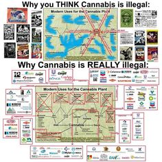 Why Cannabis is really illegal