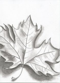 Maple Leaf Black And White Drawing By Winterrush