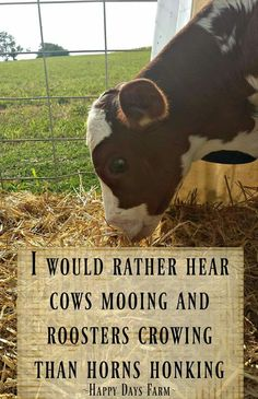 Love living in the country! Do you live in the country? How far is the nearest farm from your house? What do they raise on farms near you? Country Girl Life, Country Girl Quotes, Country Farm, Country Girls, Girl Sayings, Country Music, Country Roads, Country Living Quotes, Western Quotes