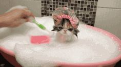 Beauty of old things and mystery of life. — gifsboom: Cat Takes a Bath. [video] ...