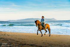 Camel, Surf, Horses, Beach, Animals, Fotografia, Animales, Surfing, The Beach