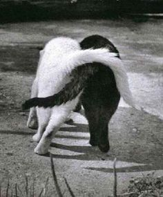 tail hug - two of our cats walk like this sometimes!  :-)