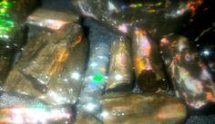 Opalized Wood  Sempur fosil kayu banten Indonesia  WA : +628992142114 || +6282225111582