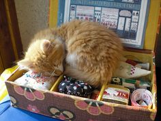 assistant couture fatigué - tired crafter companion by viviane_adxvm, via Flickr