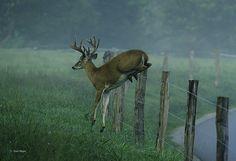 Jumping Deer 3 by stan hope, via Flickr