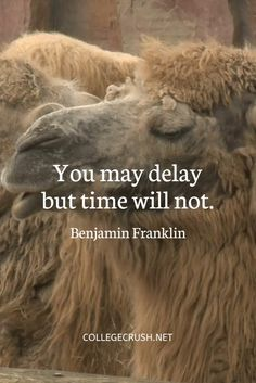 You may delay but time will not. - Benjamin Franklin | time quote | truth quote | life quote | motivational quote | benjamin franklin | freshman tips | relatable quote | success quote | book quote | sophomore year | study quote | procrastination | college life quote | author quote | via collegecrush.net Goal Quotes, Success Quotes, Motivational Quotes, Benjamin Franklin, Affirmation Quotes, Wisdom Quotes, College Life Quotes, Freshman, True Words