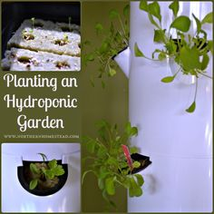Planting a Hydroponic Garden from seeds, seedlings, or cuttings for year round aeroponic gardening in the Tower Garden system, or any system you have.