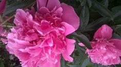 Puutarhasi kukat - keväinen kuva-albumisi!