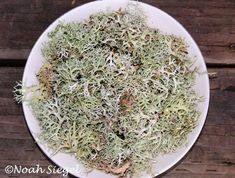 Staghorn lichen will create an electric lilac when placed in a jar with water and ammonia to ferment.