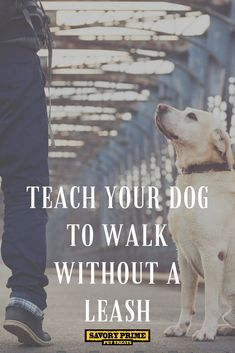 Teach Your Dog to Walk without a Leash Savory Prime Pet Treats Puppy Training Guide, Dog Clicker Training, Training Your Dog, Potty Training, Training Schedule, Dog Boarding Near Me, Pet News, Dog Accessories, Dog Walking