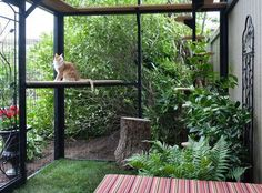 Cat Care Catio Cat Enclosure - These backyard spaces are the cat's meow. Cage Chat, Outdoor Cat Enclosure, Diy Cat Enclosure, Reptile Enclosure, Cat Cages, Cat Run, Cat Garden, Outdoor Cats, Space Cat