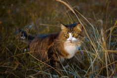 Finding Neverland Yard Maintenance, Finding Neverland, Cat Lovers, Kitty, Cats, Animals, Winter, Summer, Little Kitty